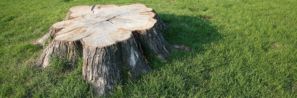 Stump removal by tree company