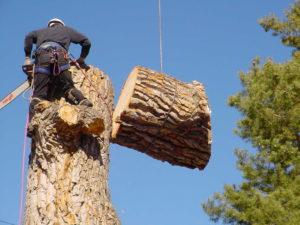 Tree service company Brandon Fl