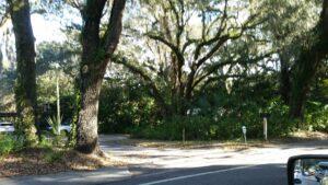 Tree Service Companies Brandon Fl.