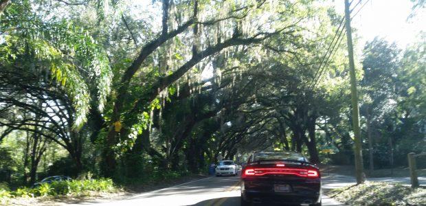 Tree care Brandon FL